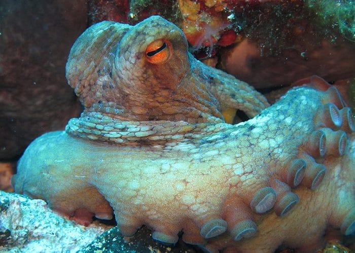 ustica c6bo voyage blog plongee