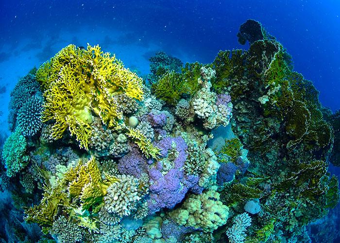 Mer Rouge : les plongeurs de retour en Egypte - C6Bo Voyage blog plongée