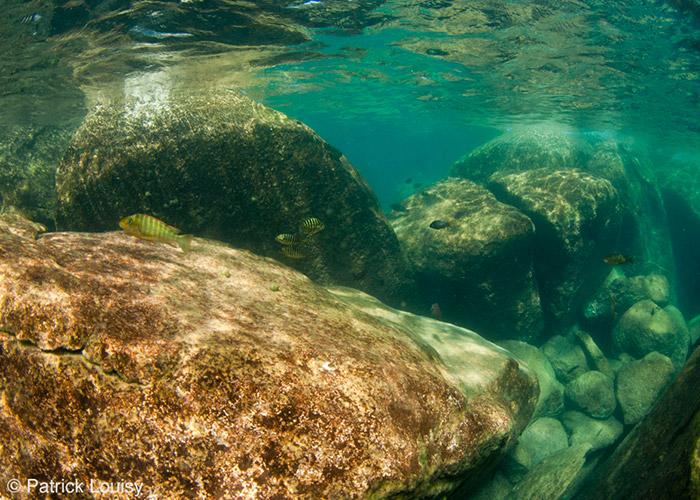 Roche superficielle - C6Bo Voyage blog plongée