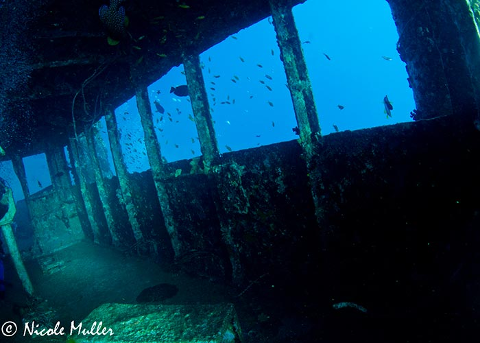Epave du Rosalie Möller - C6Bo Voyages, blog plongée
