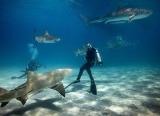 Interagir avec les requins - C6Bo Voyages, blog plongée